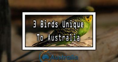 3 Birds Unique To Australia