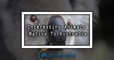 Interesting Animals Native To Australia