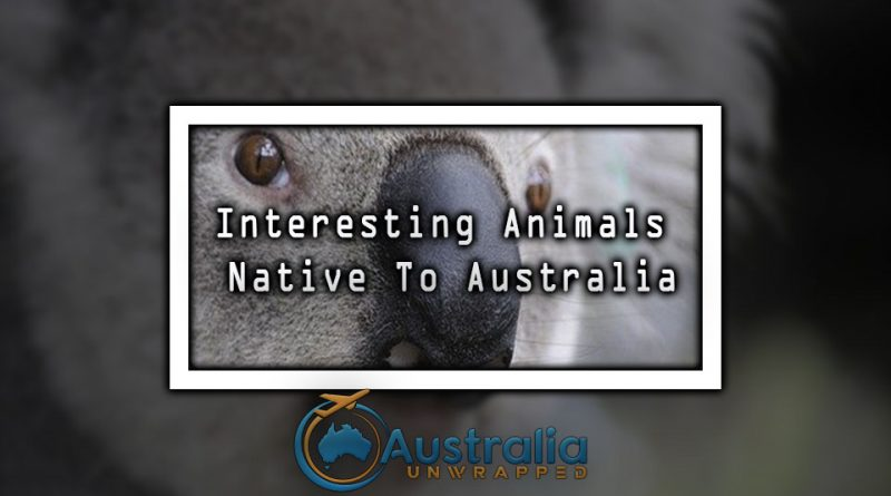 Interesting Animals Native To Australia