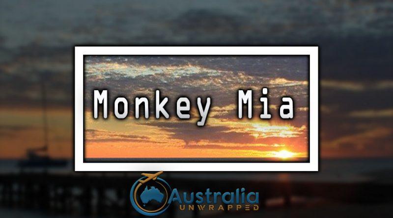 Monkey Mia