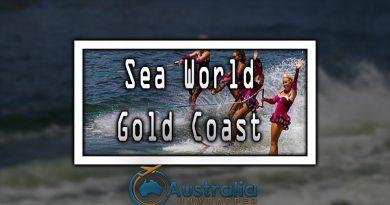 Sea World Gold Coast