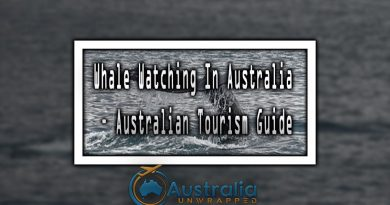 Whale Watching In Australia – Australian Tourism Guide