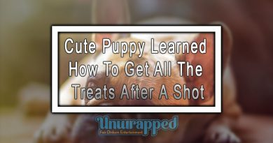 Cute Puppy Learned How To Get All The Treats After A Shot