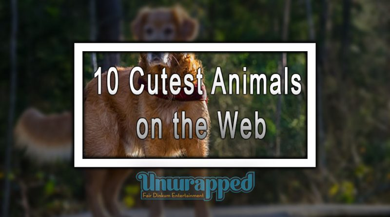 10 Cutest Animals on the Web