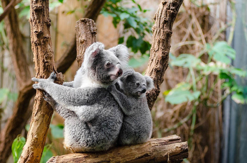 Cutest Animals on the Web
