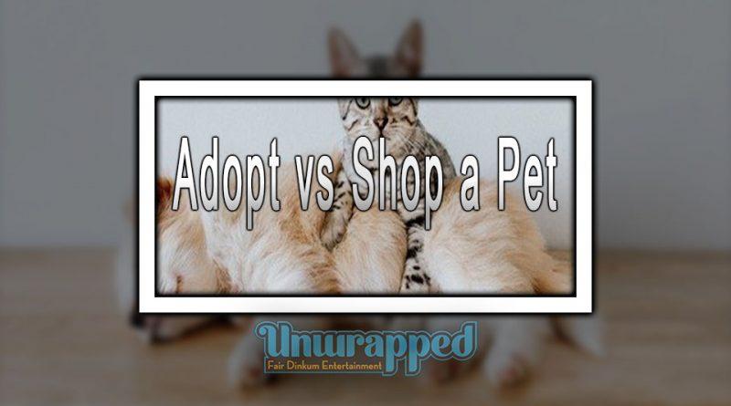 Adopt vs Shop a Pet