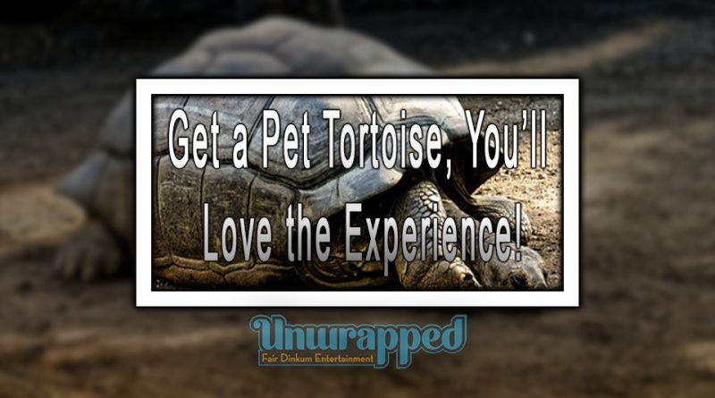 Get a Pet Tortoise, You'll Love the Experience!