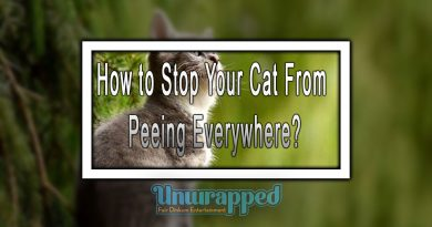 How to Stop Your Cat From Peeing Everywhere