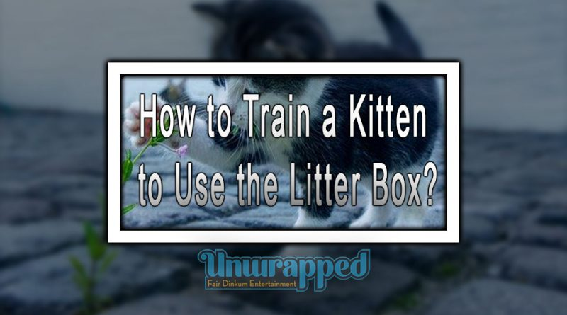 How to Train a Kitten to Use the Litter Box