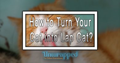 How to Turn Your Cat into Lap Cat