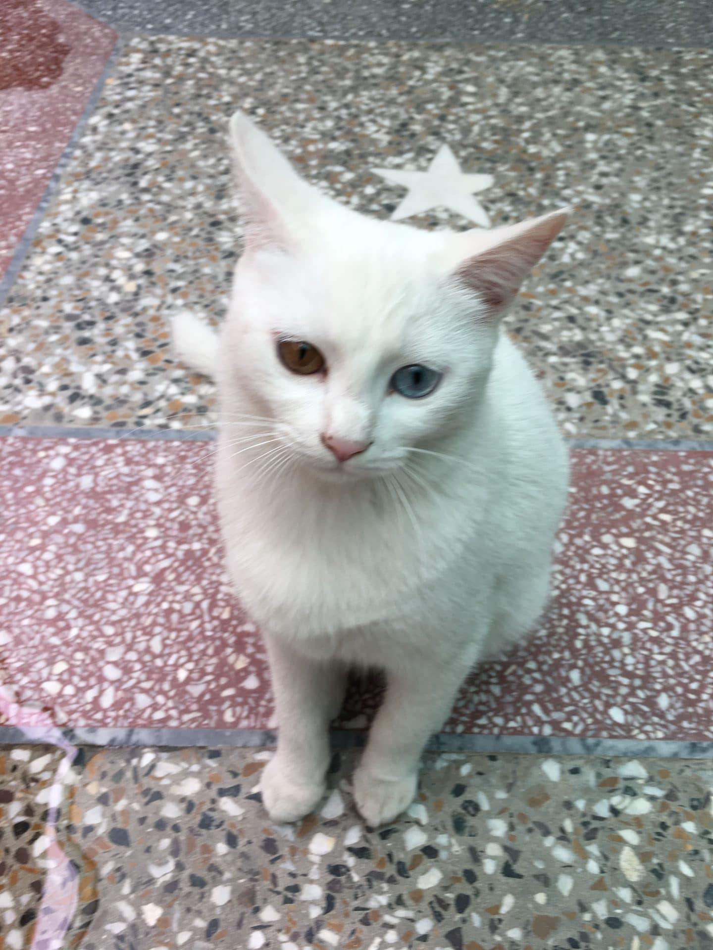 15, 2016. Cat peeing around cumm