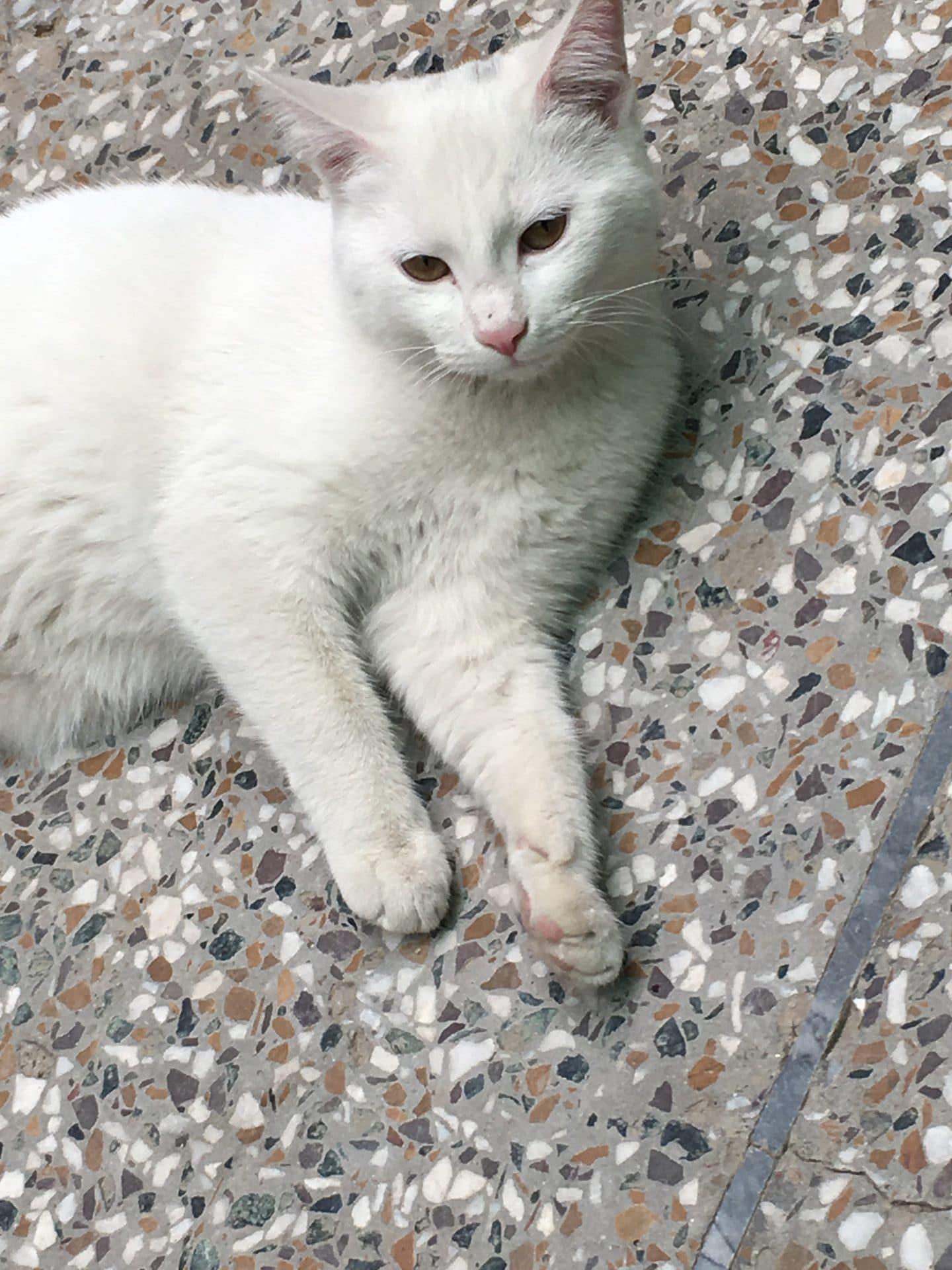 Mysti the Cat