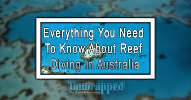 Everything You Need To Know About Reef Diving In Australia