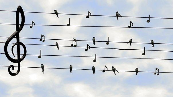 Birds Singing and Chirping Free Digital Download
