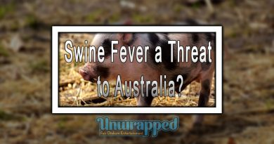 Swine Fever a Threat to Australia