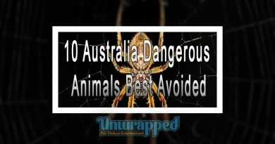 10 Australia Dangerous Animals Best Avoided