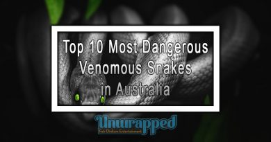 Top 10 Most Dangerous Venomous Snakes in Australia