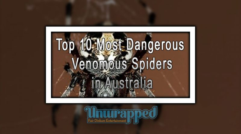 Top 10 Most Dangerous Venomous Spiders in Australia