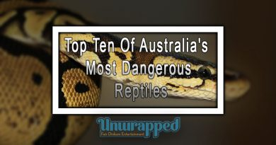 Top Ten Of Australia's Most Dangerous Reptiles