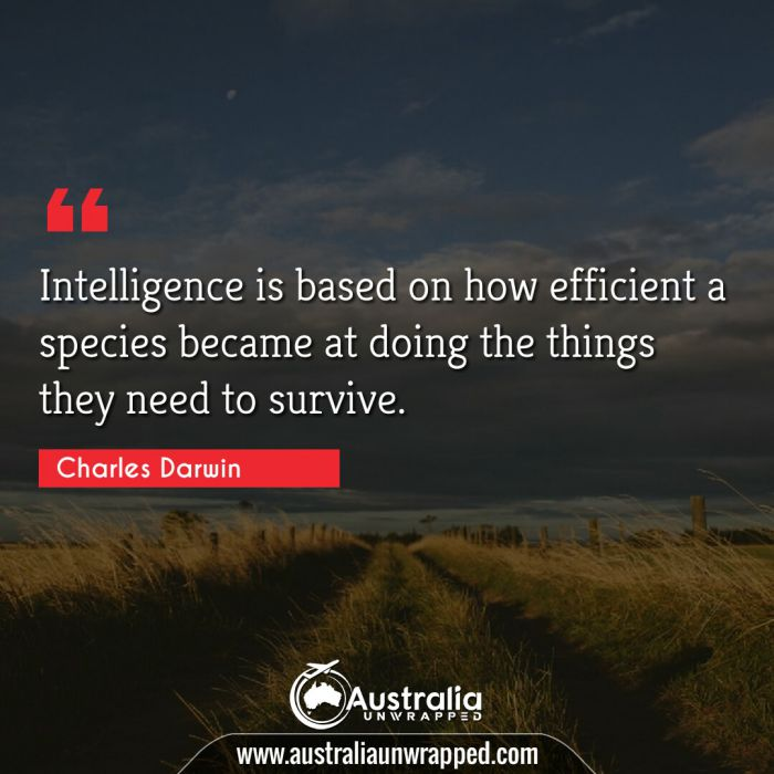 Intelligence is based on how efficient a species became at doing the things they need to survive.
