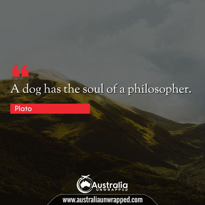 A dog has the soul of a philosopher.
