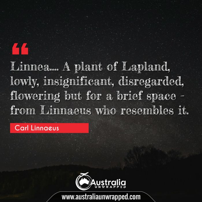 Linnea…. A plant of Lapland, lowly, insignificant, disregarded, flowering but for a brief space - from Linnaeus who resembles it.