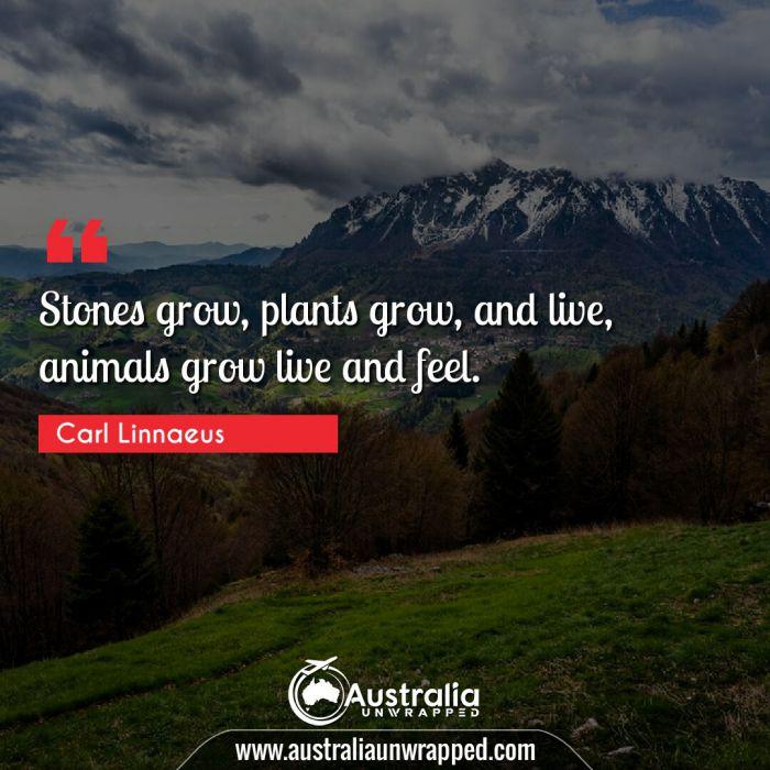 Stones grow, plants grow, and live, animals grow live and feel.