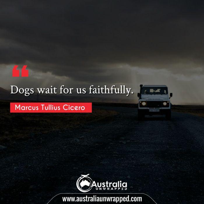 Dogs wait for us faithfully.