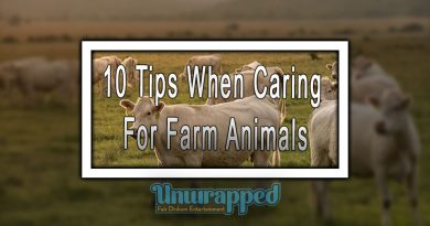10 Tips When Caring For Farm Animals