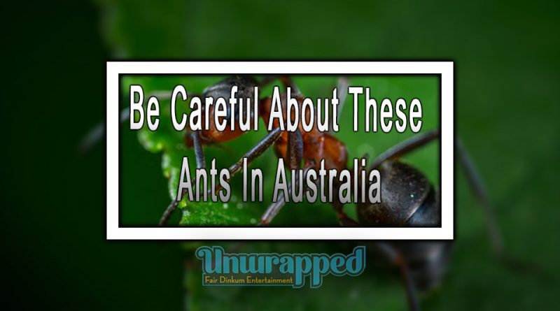 Be Careful About These Ants In Australia