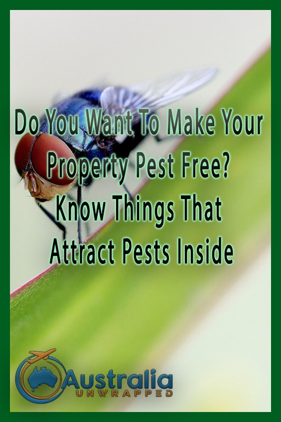 Do You Want To Make Your Property Pest Free? Know Things That Attract Pests Inside