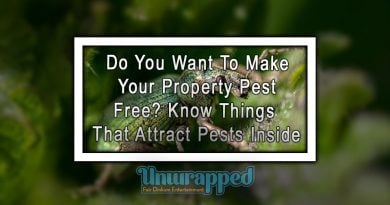 Do You Want To Make Your Property Pest Free Know Things That Attract Pests Inside