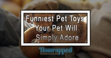 Funniest Pet Toys Your Pet Will Simply Adore