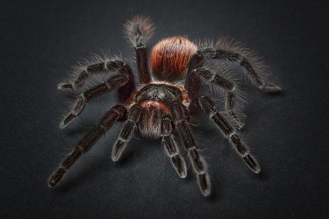 10 Australia Dangerous Animals Best Avoided