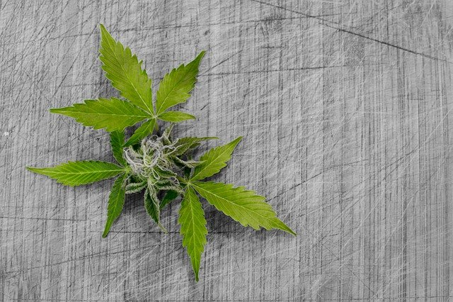 New Zealand Votes On Legalisation Of Cannabis Creating A New Industry