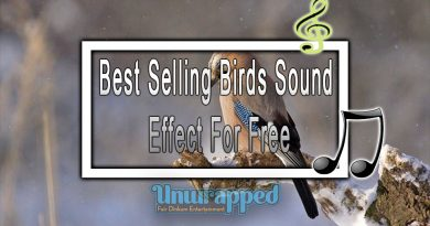 Best Selling Birds Sound Effect For Free