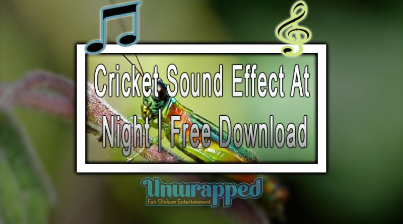 Cricket Sound Effect At Night|Free Download