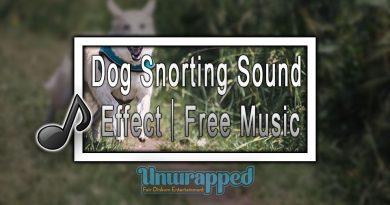 Dog Snorting Sound Effect|Free Music