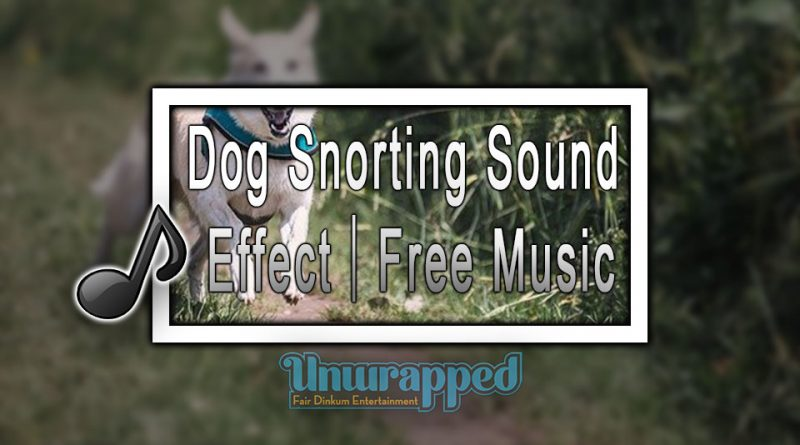 Dog Snorting Sound Effect|Free Music