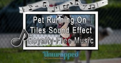 Pet Running On Tiles Sound Effect|Royalty-Free Music