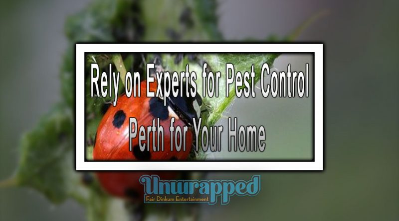 Rely on Experts for Pest Control Perth for Your Home