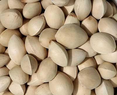 Ginkgo nuts Geo Diet 10 Most Healthy Nuts