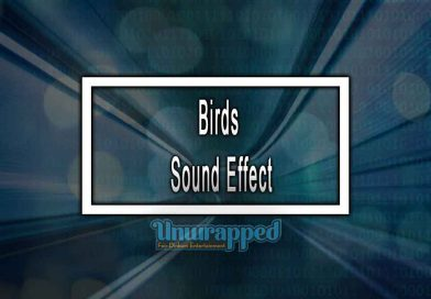 Birds Sound Effect