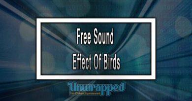 Free Sound Effect Of Birds