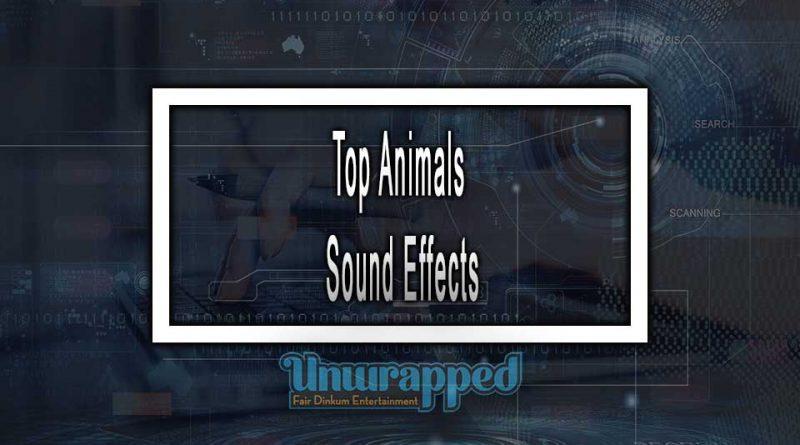 Top Animals Sound Effects