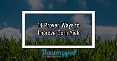 11 Proven Ways to Improve Corn Yield