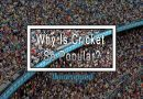 Why Is Cricket So Popular?